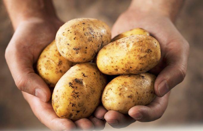 10 Примеров ядовитой еды, которой мынепрочь перекусить