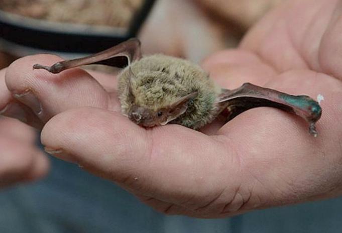 10 Самых странных летучих мышей