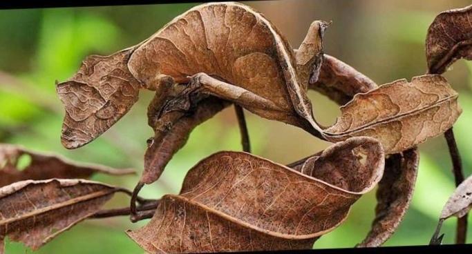 10 Самых удивительных ящериц вмире