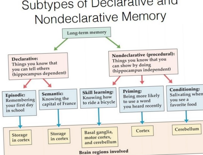 Американские ученые научились восстанавливать память и удалять воспоминания