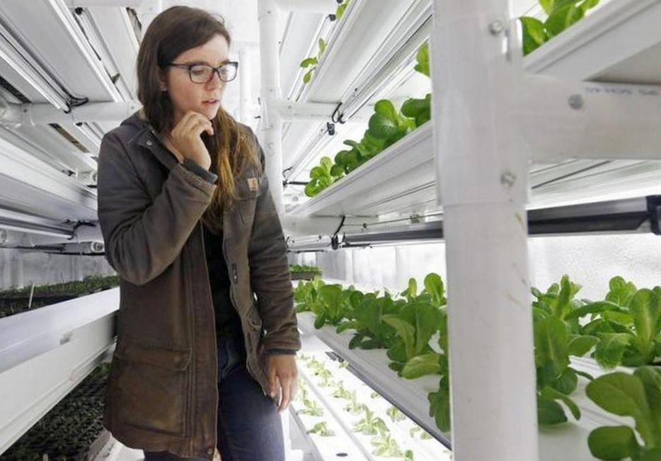 Арендовать мини-ферму?</p></p> <p> Легко! Facepla.net последние новости экологии
