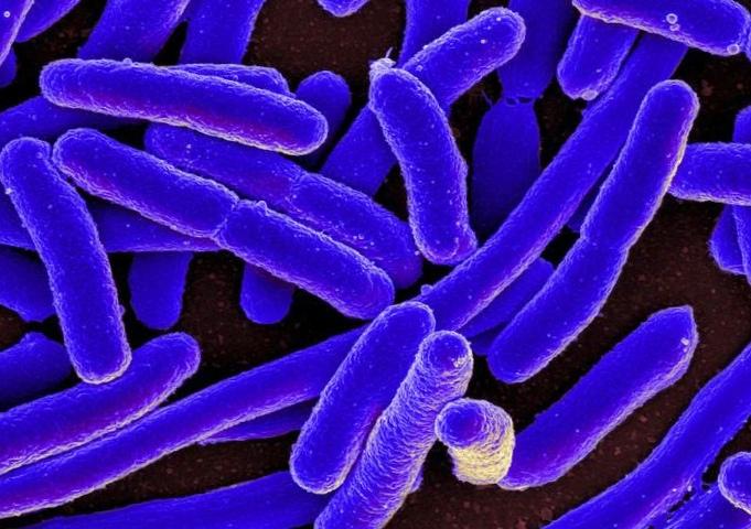 Бактерии мутировали инебоятся антибиотиков