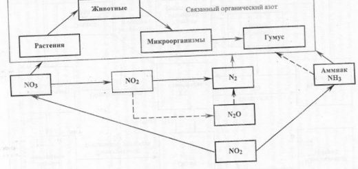 biologicheskij-krugovorot-jelementov-v-landshafte_2.jpg