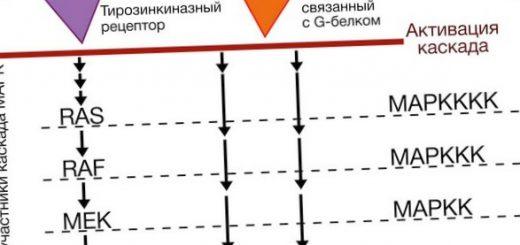 bolee-90-virusov-kozhi-cheloveka-ploho-izucheny_1.jpg