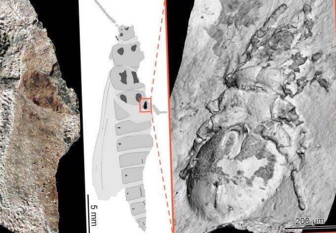 Физики при помощи рентгена получили трехмерную «фотографию» насекомого