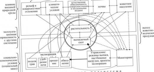 funkcionirovanie-prirodnyh-geosistem_2.jpg