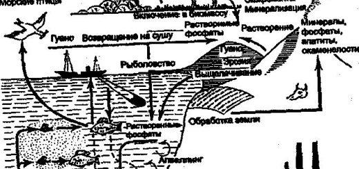 geohimicheskij-krugovorot-mineralnyj-obmen_1.jpg
