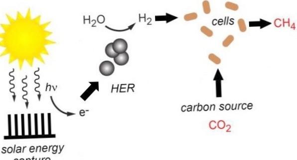 Гибридный метод искусственного фотосинтеза производит водород и метан