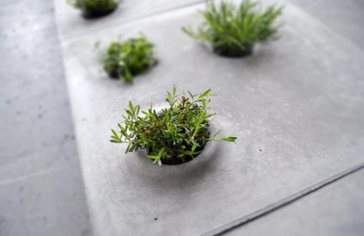 Grey to green – перемирие в войне горожан и растений