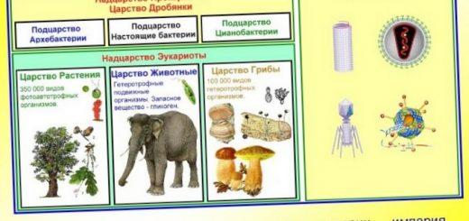himicheskij-sostav-organizmov_2.jpg