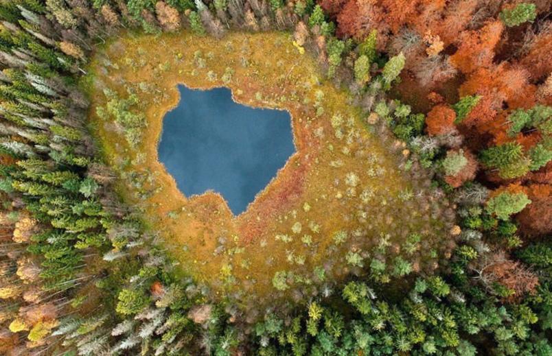 Инновации в лесной отрасли республики беларусь