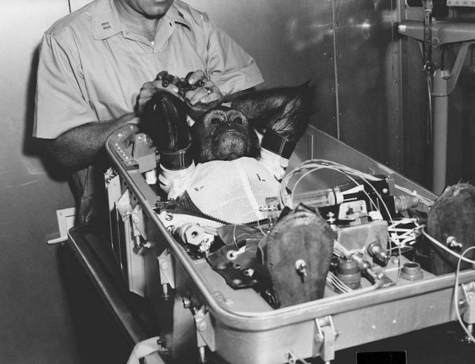 Искусственно выращенные легкие спасут тысячи лабораторных крыс
