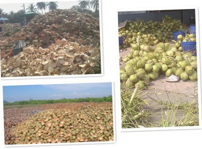 Электроэнергия из кокосовых отходов