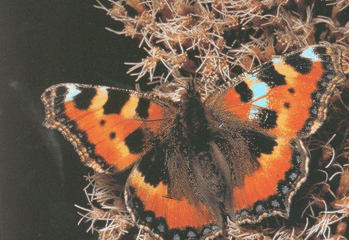 Как превратиться из гусеницы в бабочку или знакомство с тенью