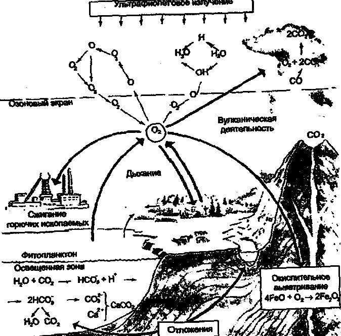 Количественные характеристики биологического круговорота.