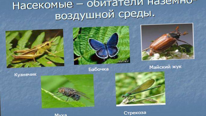 Коллекции насекомых, первые шаги в энтомологии