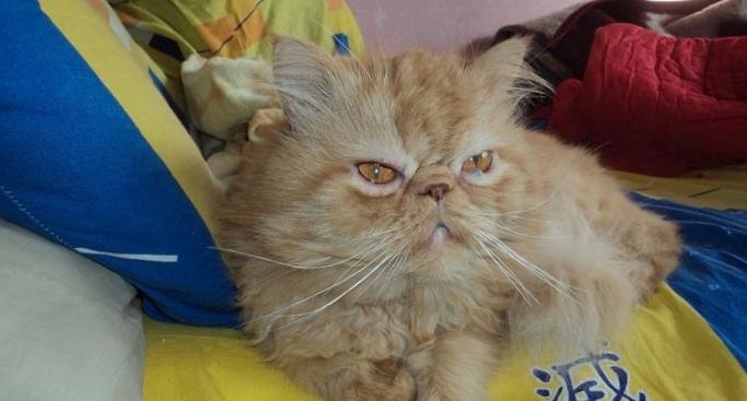 Кошачьи укусы могут оказаться смертельными