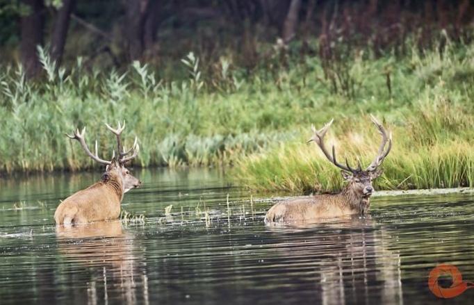 Куликова гордость: болота