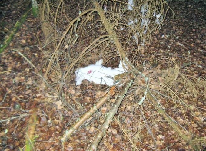 Лес в хибинах вырубают... на законных основаниях