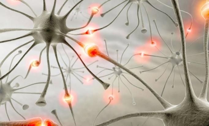 Мытеряем мозг: выживает глупейший