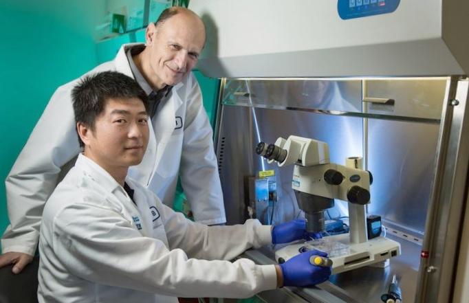 Немецкие ученые составляют карты эпигенома клеток сердечной мышцы
