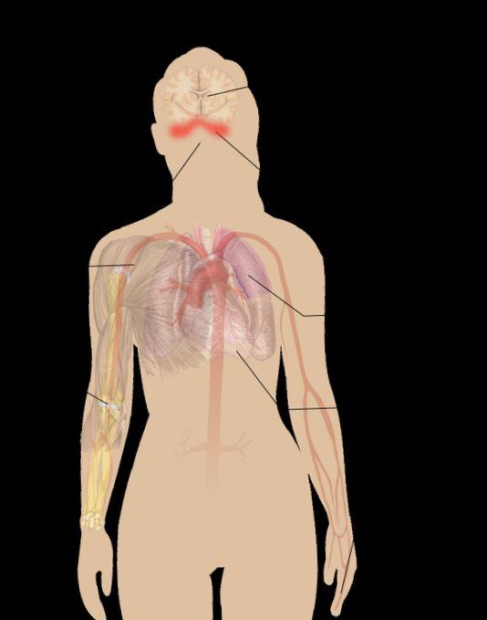 Новый анализ крови, выявляющий повреждения печени
