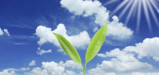obratnyj-fotosintez-proizvodit-biotoplivo_1.jpg