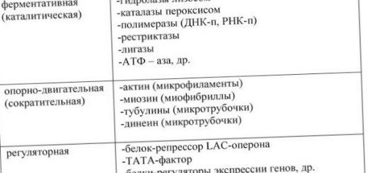 opredelenie-belkov-v-kletkah-i-tkanjah_1.jpg