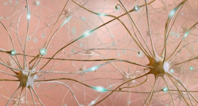 Опыты налюдях: как исследуют человеческий мозг