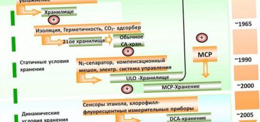 pishhevaja-cennost-jablok-obzor-osnovnyh-krymskih_1.jpg