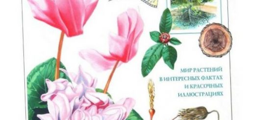 pochemu-sazhenec-krasnogo-kashtana-stoit-2000-evro_3.jpg