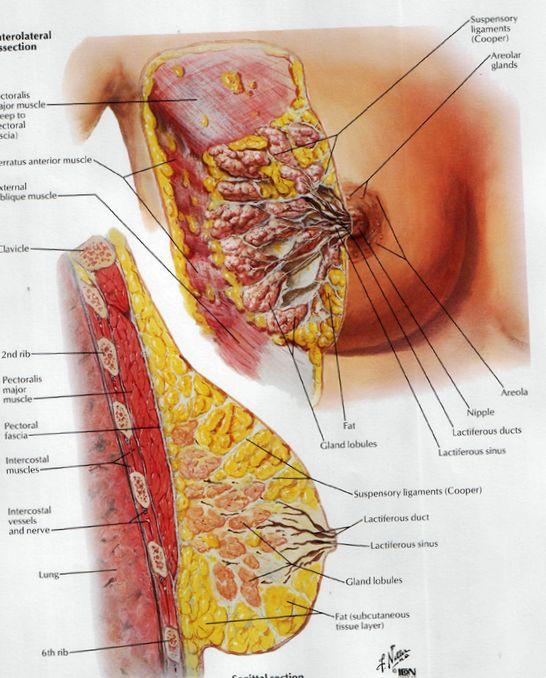 Причины боли грудной железы