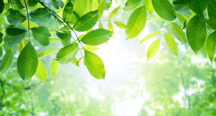 Прорыв в искусственном фотосинтезе поможет превращать co2 в пластмассы и биотопливо