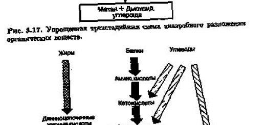 razlozhenie-organicheskih-veshhestv_2.jpg