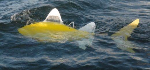 ryba-robot-kontroliruet-sostojanie-okruzhajushhej_1.jpg