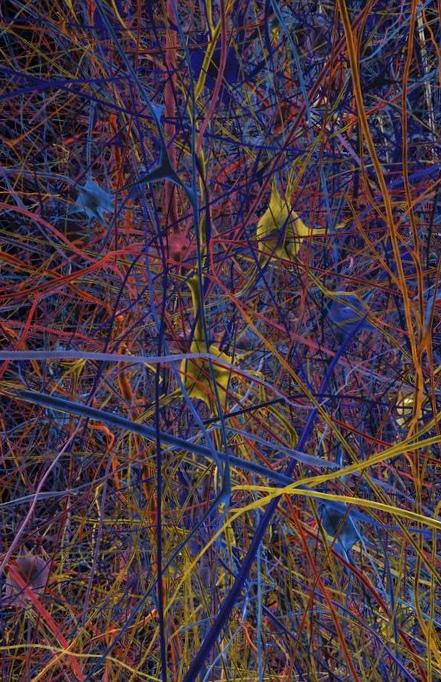 Самая сложная компьютерная модель головного мозга