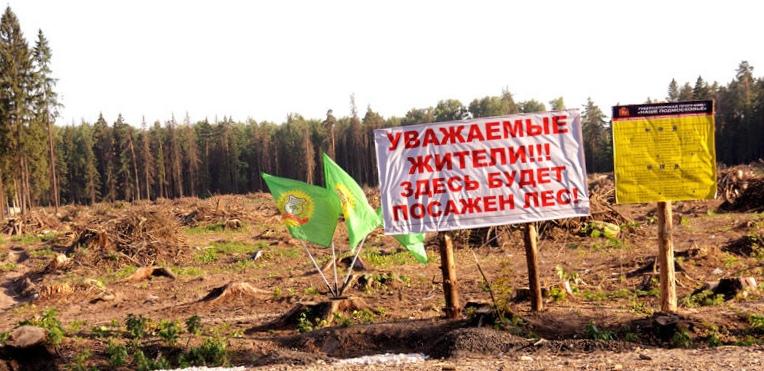 sanitarnaja-vyrubka-derevev-v-moskovskoj-oblasti_1.jpg