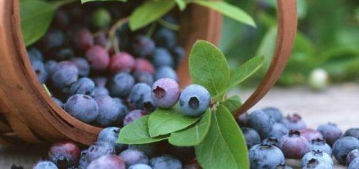 sbor-i-zagotovka-lekarstvennyh-trav-cvetov-plodov_1.jpg