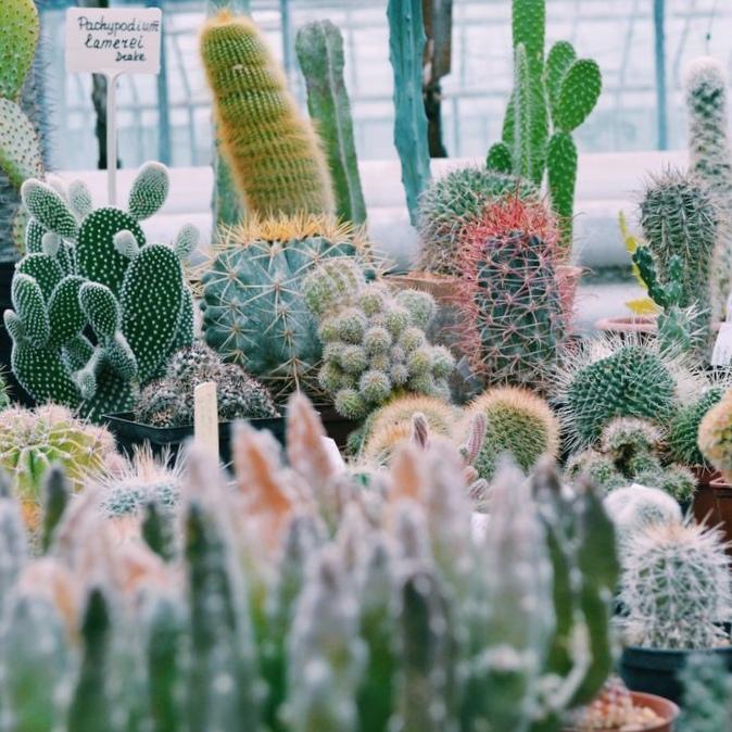 Семь самых лучших ботанических садов российской федерации.