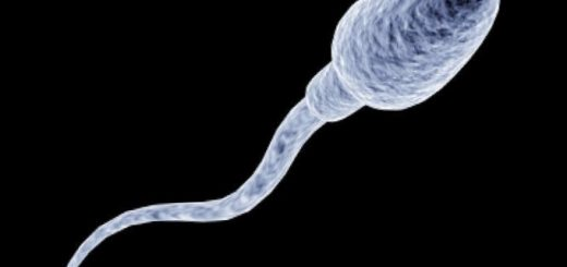 spermatozoid-vyrastili-vprobirke_1.jpg
