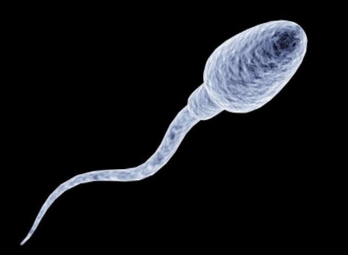 Сперматозоид вырастили впробирке
