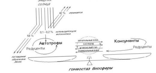 srednij-himicheskij-sostav-zhivogo-veshhestva_2.jpg