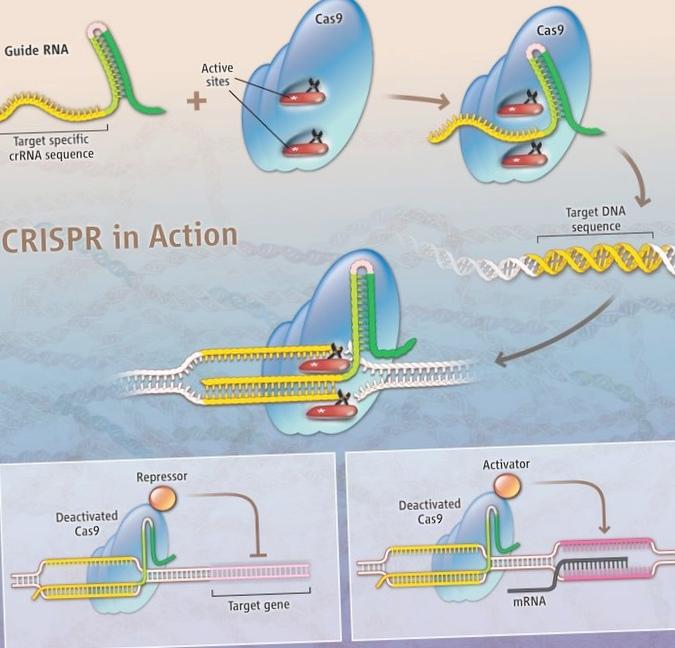 Ученые очистили геном человека отвич