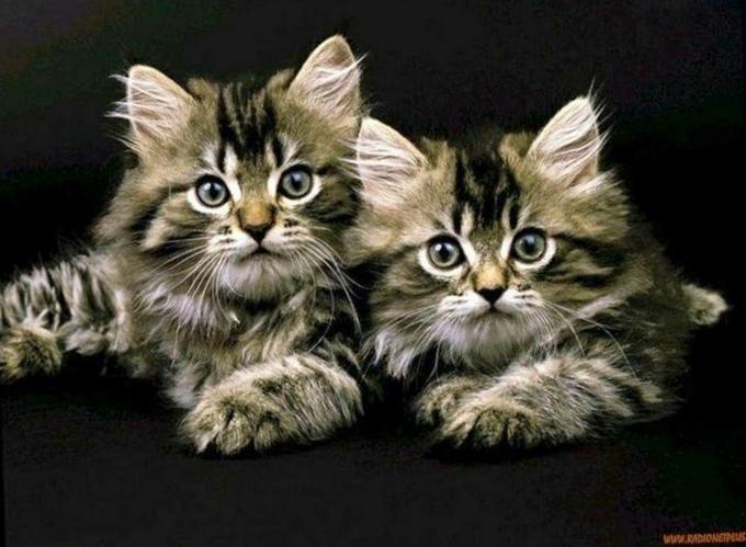 Ученые создали «шапку-невидимку» для кошки