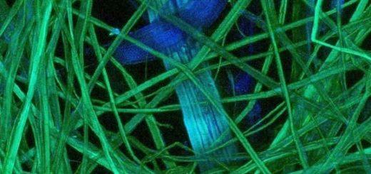uglerodnye-nanotrubki-i-nejrony_1.jpg