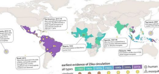 ustanovleno-stroenie-virusa-zika_1.jpg
