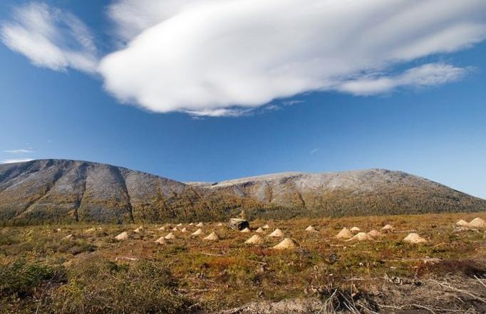 В мурманской области в хибинах вырублено около 100 гектар леса